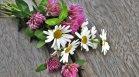 5 билки, които ще повлияят благоприятно на кожата ви