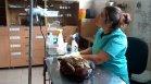 Ветеринари се борят за живота на простреляния край Ямбол царски орел