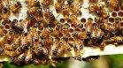 Масова смъртност при пчелите: Можем ли да очакваме поскъпване на меда