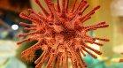 Откриха нови коронавируси при прилепи, те са почти идентични с оригиналния вариант?