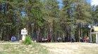 Само за седмица: Близо 1000 незаконно отсечени дървета