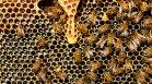 Областните агенции по храните започват проверки на пчелните семейства