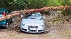 Повалени дървета и покриви, затиснати автомобили – щетите след бурята в Ловеч