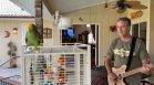"""Папагал пее в дует със стопанина си парчета на Бон Джоуви и """"Бийтълс"""" (+видео)"""