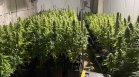Полицаи откриха близо 100 кг марихуана във Ветрен дол