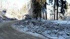 """Продължава разчистването на паднали дървета в """"Петрохан"""""""