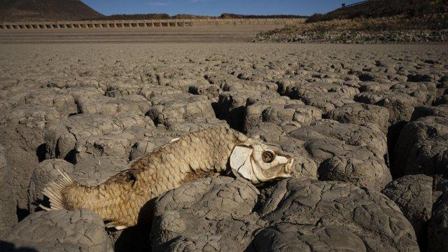 ООН: Двойно повече бедствия заради изменението на климата